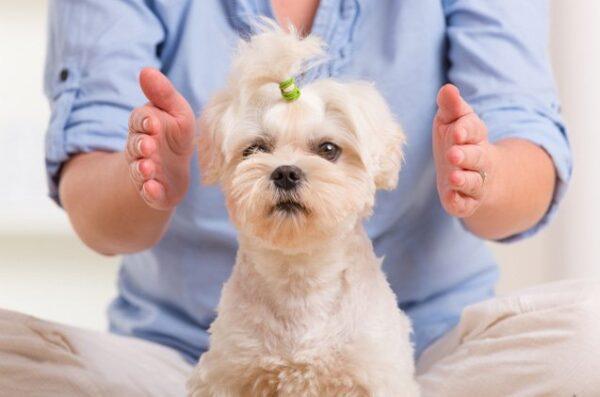 Pet healing in Toronto