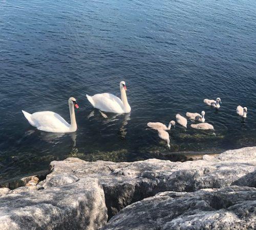 Healing-by-the-lake Humber Bay Shores